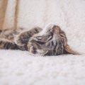 寒くて眠れない夜の救世主。「山善フランネル電気敷毛布」で幸せになった